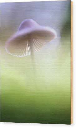 Wood Print featuring the photograph Mushroom Ufo by Dirk Ercken
