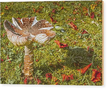 Mushroom Upclose Wood Print