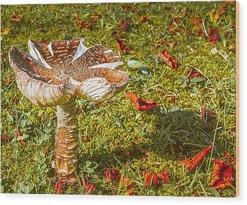 Mushroom Upclose Wood Print by Judi Saunders