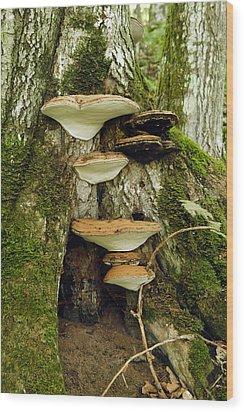 Mushroom Village Wood Print
