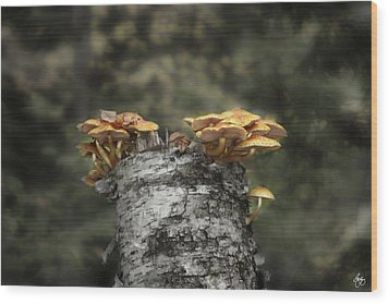 Mushrooms Atop Birch Wood Print