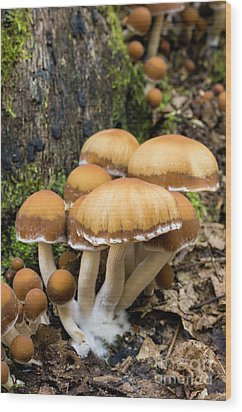 Wood Print featuring the photograph Mushrooms - D009959 by Daniel Dempster
