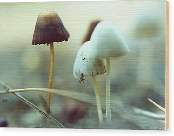 Mushrooms Wood Print by Don Youngclaus