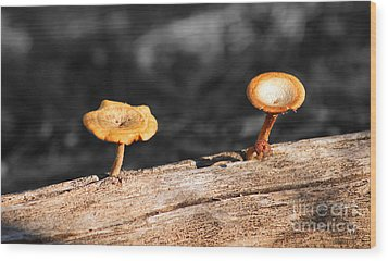Wood Print featuring the photograph Mushrooms On A Branch by Donna Greene
