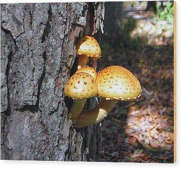 Mushrooms On A Tree Wood Print by George Jones