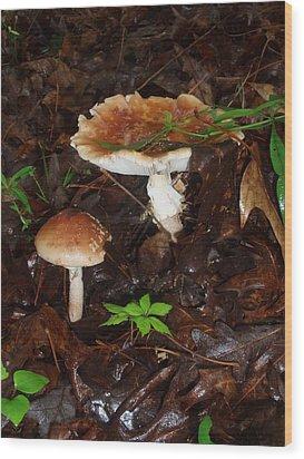 Mushrooms Rising Wood Print
