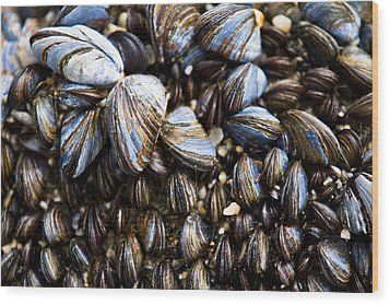 Wood Print featuring the photograph Mussels by Justin Albrecht