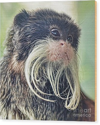 Mustache Monkey Watching His Friends At Play Wood Print by Jim Fitzpatrick