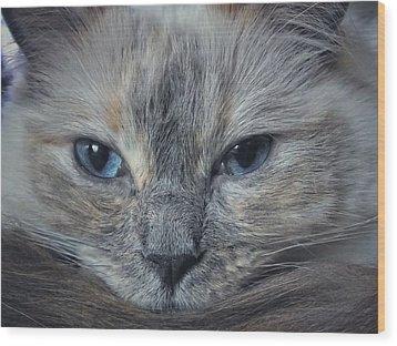 Mustachioed Cat Wood Print by Karen Stahlros
