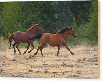 Mustang Gallop Wood Print by Mike  Dawson
