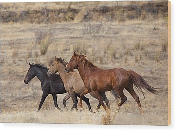 Mustang Trio Wood Print by Mike  Dawson