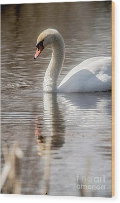 Wood Print featuring the photograph Mute Swan - 2 by David Bearden