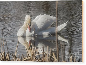 Wood Print featuring the photograph Mute Swan - 3 by David Bearden