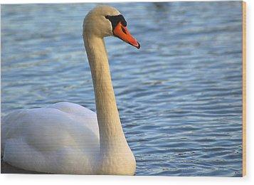 Mute Swan 3 Wood Print by Mark Platt