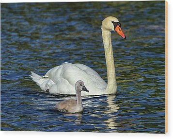 Mute Swan, Cygnus Olor, Mother And Baby Wood Print by Elenarts - Elena Duvernay photo