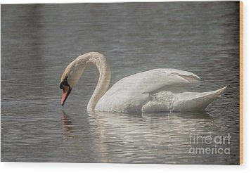 Wood Print featuring the photograph Mute Swan by David Bearden