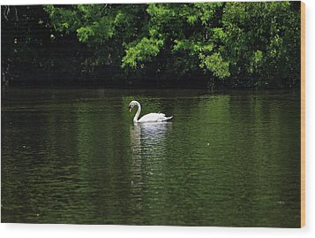 Wood Print featuring the photograph Mute Swan by Sandy Keeton