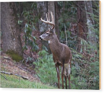 Wood Print featuring the photograph My Best Side by Douglas Stucky