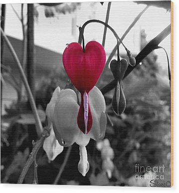 My Bleeding Heart Wood Print by September  Stone