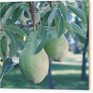 My Brothers Pear Tree Wood Print by Wayne Potrafka