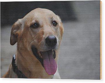 My Dog Ubu Wood Print