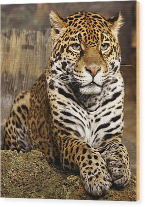 My Favorite Cat Wood Print