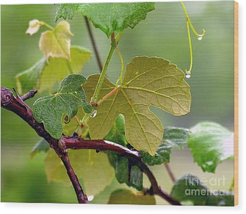 My Grapvine Wood Print by Robert Meanor