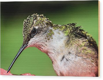 My Hummingbird Wood Print by Debbie Green