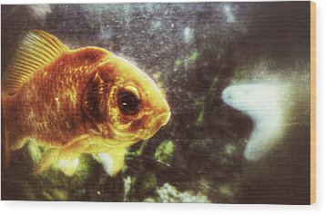 Wood Print featuring the photograph My Littlest Fish by Isabella F Abbie Shores FRSA