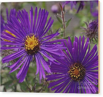 My Purple Ways Wood Print by Debbie May