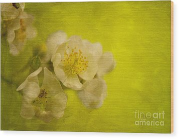 My Sweet Wild Rose Wood Print by Lois Bryan
