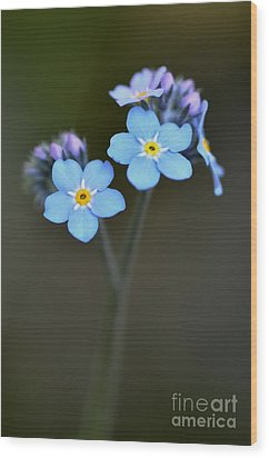 Wood Print featuring the photograph Myosotis by Sylvie Leandre