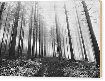 Mysterious Forest Wood Print by Michal Boubin