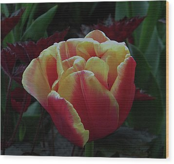 Wood Print featuring the photograph Mysterious Tulip by Manuela Constantin