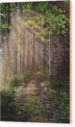 Wood Print featuring the photograph Mystery At Dawn by Debra and Dave Vanderlaan