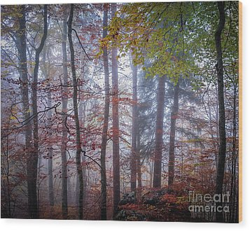 Wood Print featuring the photograph Mystery In Fog by Elena Elisseeva