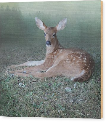 Wood Print featuring the photograph Mystic Fawn by Sally Banfill