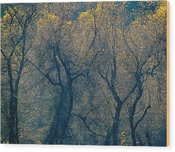 Mystic Trees Wood Print