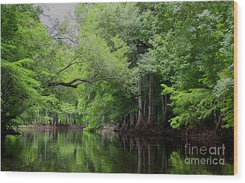 Mystical Withlacoochee River Wood Print