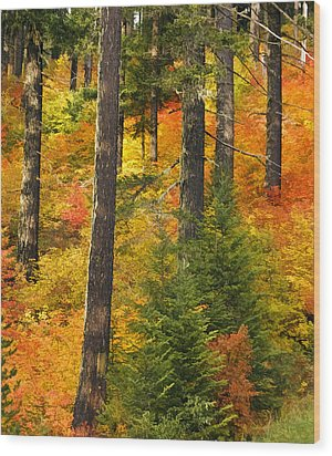 N W Autumn Wood Print by Wes and Dotty Weber