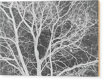 Naked Branch Wood Print by Dodie Ulery