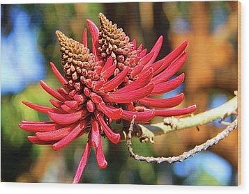 Naked Coral Tree Flower Wood Print