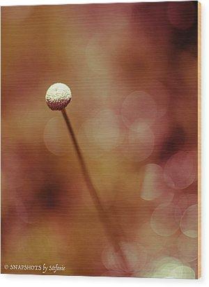 Naked Dandelion Wood Print by Stefanie Silva