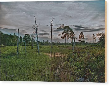 Naked Trees Swamp Wood Print by Stephen  Johnson