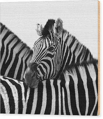 Namibia Zebras IIi Wood Print by Nina Papiorek