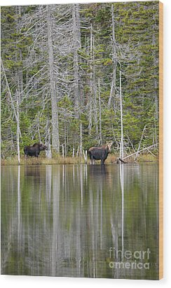 Nancy Pond - White Mountains New Hampshire Usa Wood Print