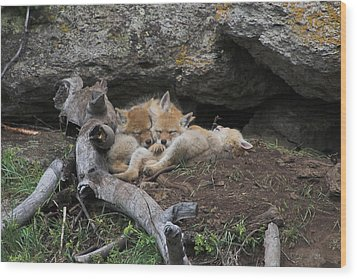 Wood Print featuring the photograph Nap Time by Steve Stuller