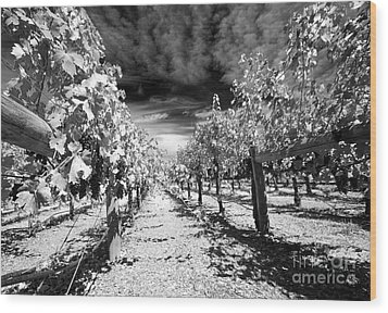 Napa Rows In Bw Wood Print by Mary Haber