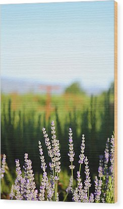 Napa View Wood Print by Ty Helbach