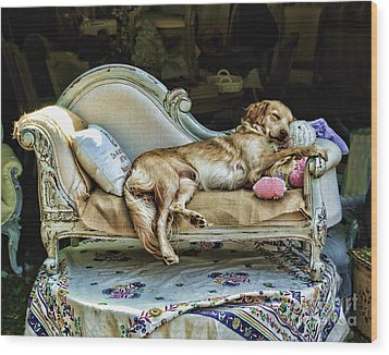 Napping Dog Promo Wood Print